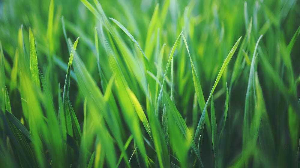 Lawn Blog Header Image